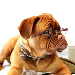 Les 10 chiens les plus intelligents